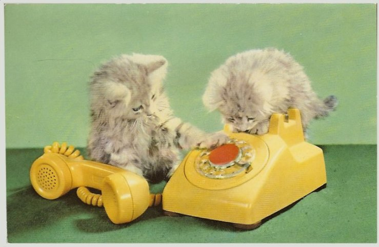 cat-postcards_potpourri_catpostcards_CATS Squeaker_CATPCSqueaker2telephonegreen